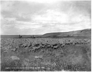 Ranching Scene in Alberta